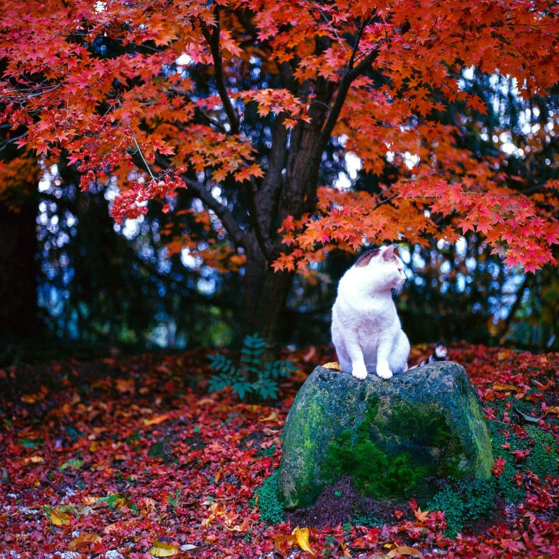 The tree, the cat and a stone